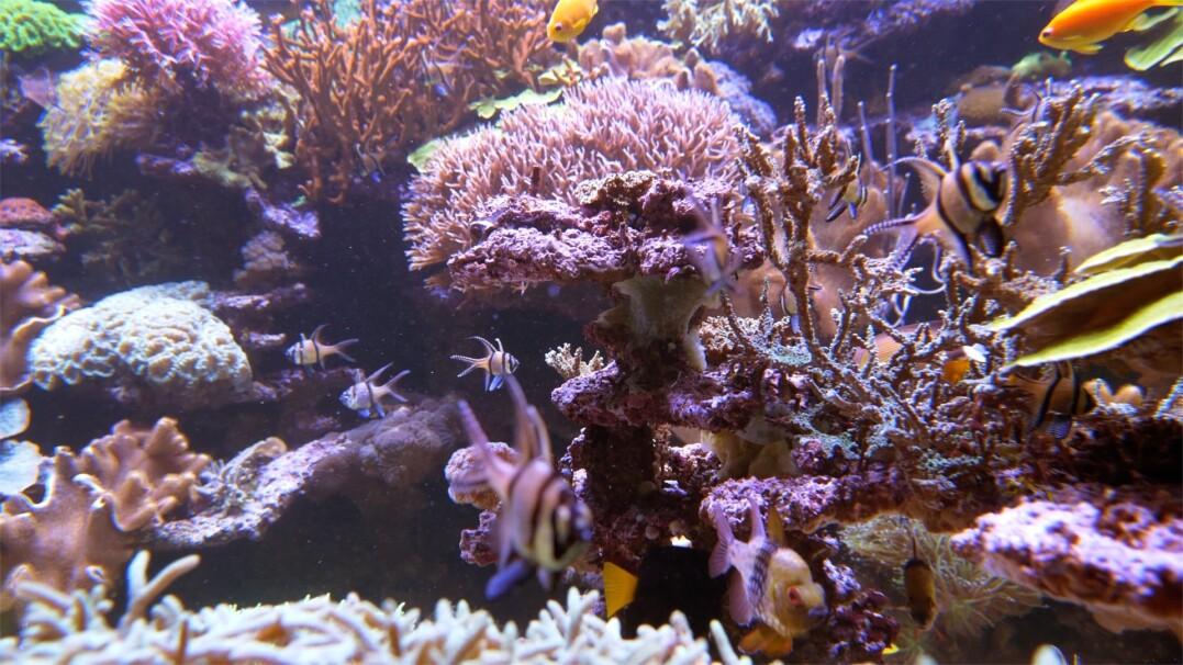 Naukowcy odkryli rafę koralową wysoką na 500 metrów