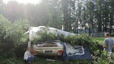 Drzewo spadło na przyczepę kempingową (KWP w Gorzowie Wlkp.)